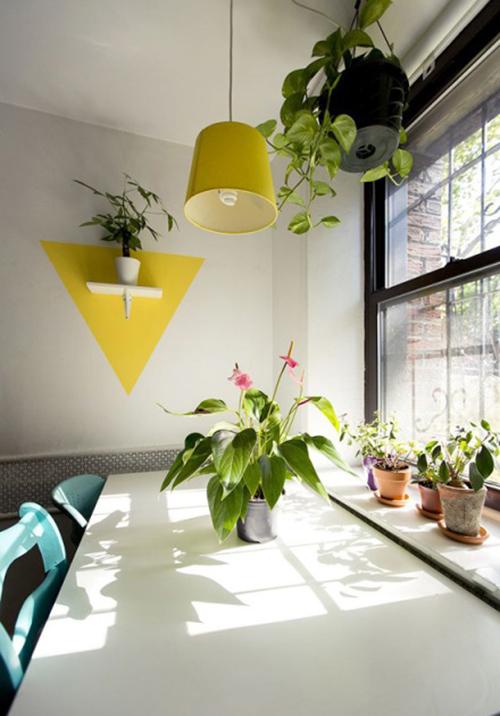 今冬室内装饰 必须给房间加点观叶绿色植物