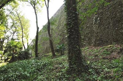 人造植物墙效果_人造植物墙咨询_苏州植物墙