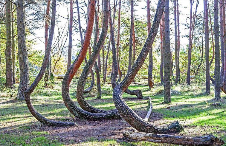 """美国""""生命之树""""生长无视重力法则"""