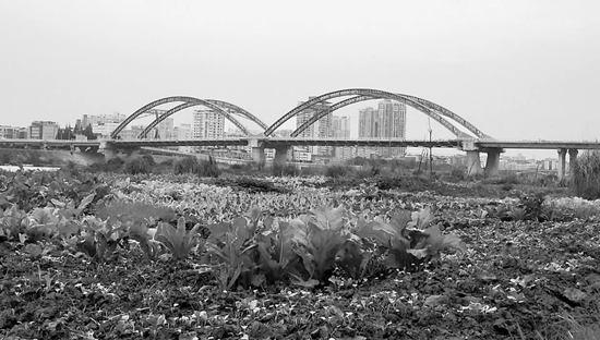 """南充:沿江湿地变菜地块块""""补丁""""谁来管?"""
