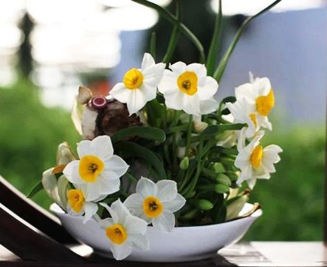 如何让你的花花草草安然过冬