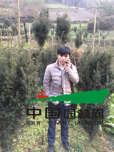 葛振辉:专注红豆杉之芯 打造未来红豆梦
