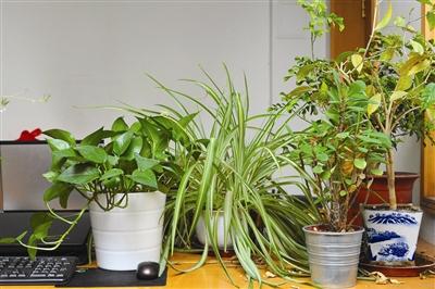 北方春季室内种植花草养护知识