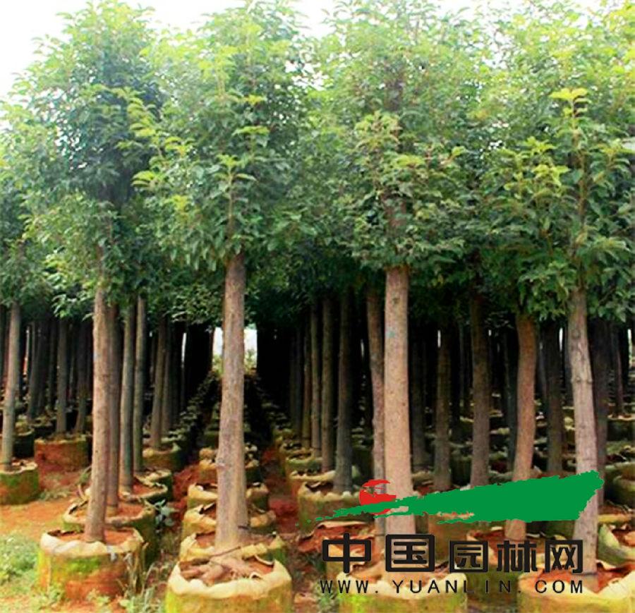 昆明宜良花木产业发展突飞猛进