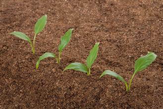 改变盆花碱性土壤的三种方法
