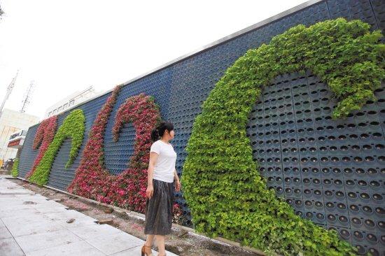 台州椒江区首座立体花墙初见雏形