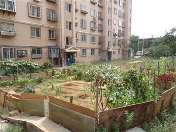 青岛:升平花园小区绿地变菜地 沤肥臭气熏天