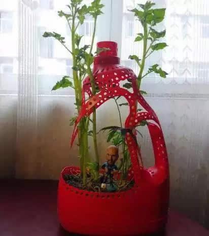 当洗衣液瓶改造成花盆