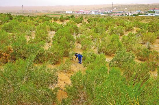 这条公路把沙漠深处的塔里木油田与外面的世界联系在