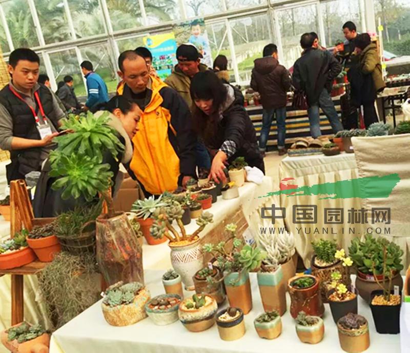 四川:成都首届多肉植物展成功举办