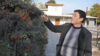湖北:李家均发展庭院经济成效显