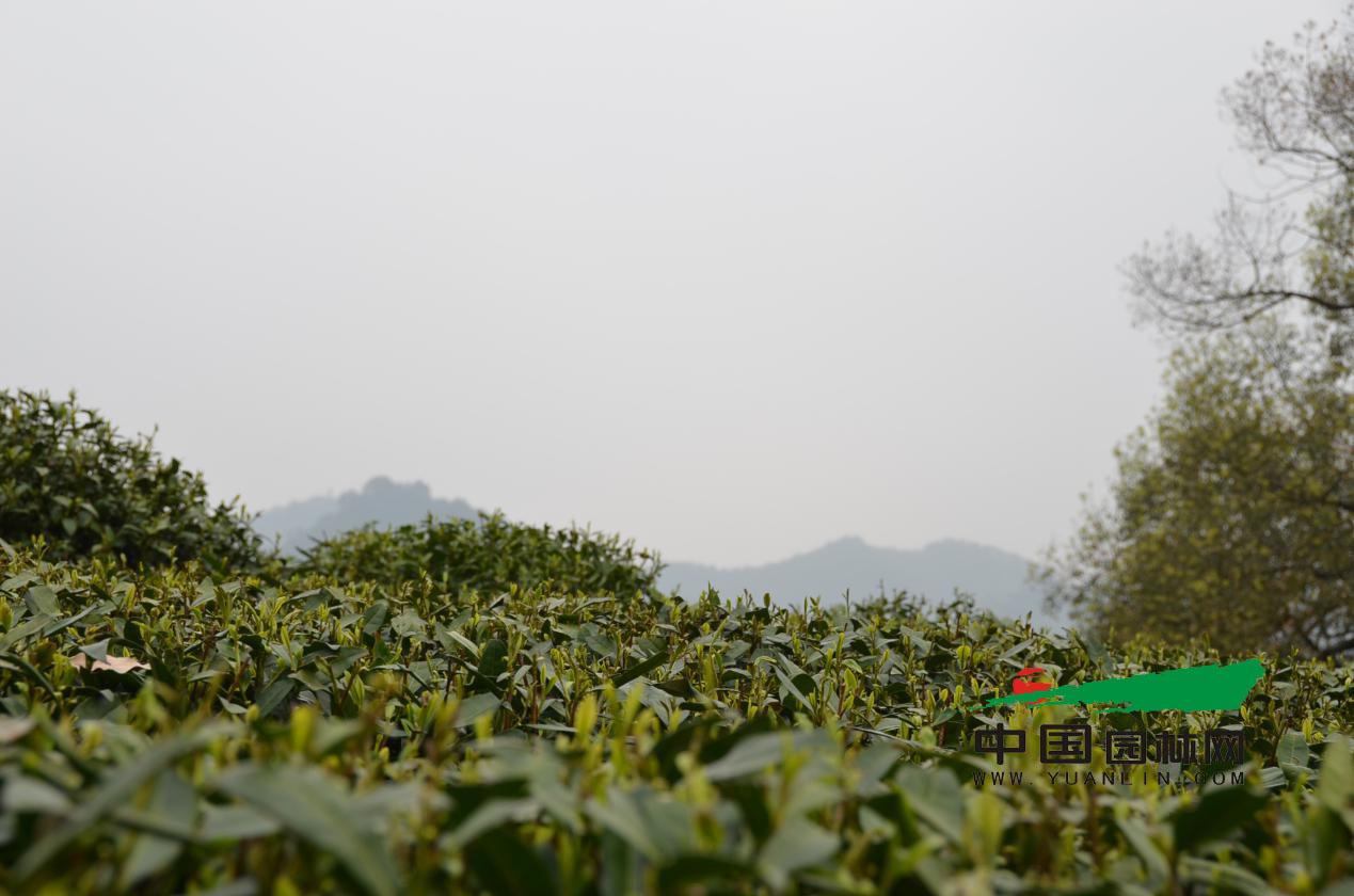 兴义龙井风景家园图片