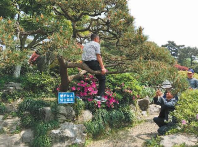 """""""中国式赏花""""现西湖边 爬树采花游客骂劝阻者"""