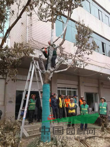 云南苗木行业协会联席会议在昆召开