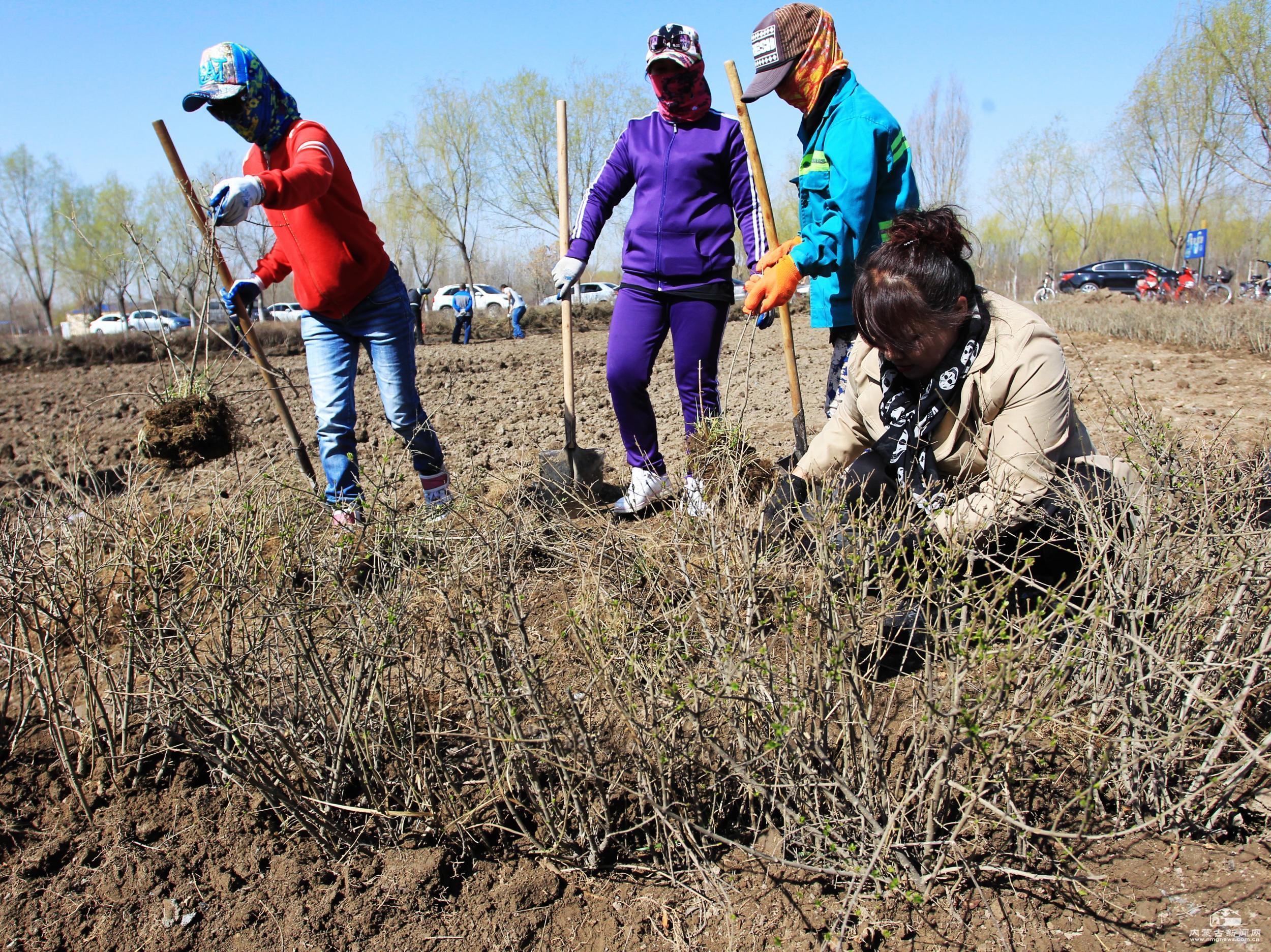 内蒙古人均公园绿地面积达到18.56平方米
