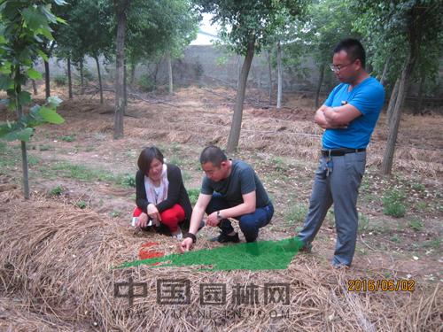 林下种植蘑菇效益好 助力苗农走出困境