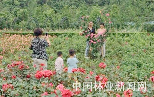 浙江开化:花木产业园休闲赏花乐无穷