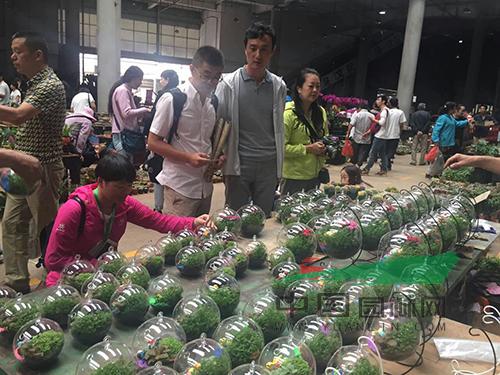 """斗南花卉市场,现已发展成为""""中国乃至亚洲最大"""