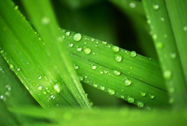 美国最新研究称全球变暖 植物需水量减少