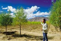 西藏林木良种繁育基地雏形已现