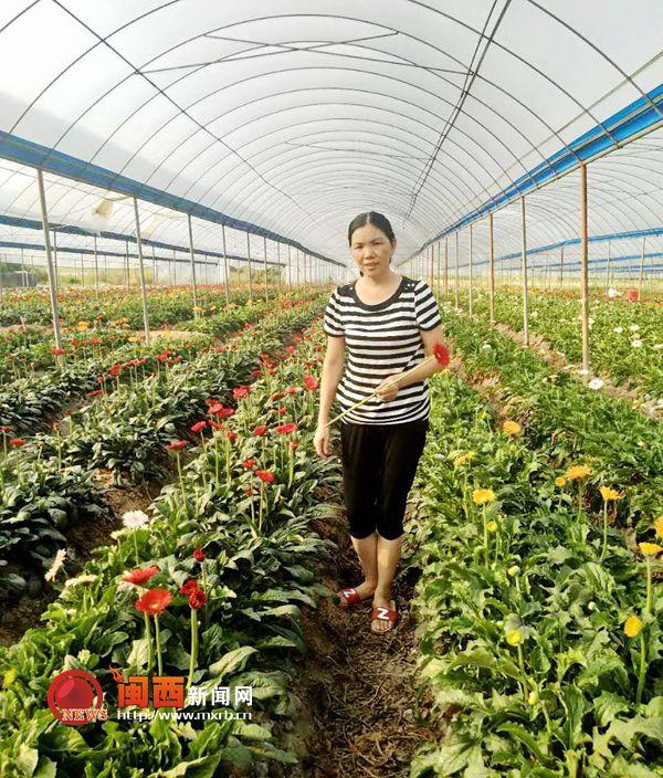 福建连城:种植鲜切花脱贫致富