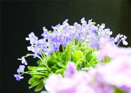 上海植物园秋季花展