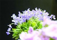 上海植物园秋季花展 500多株阴生植物呈现进化之美