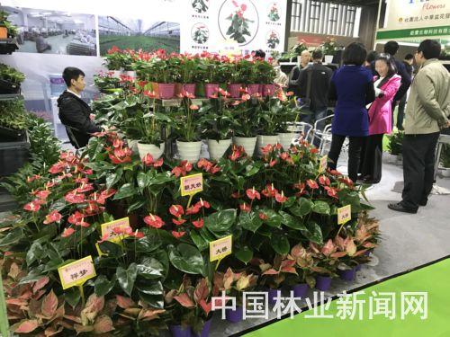 广州花展直面需求贴合消费市场