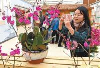 第五届中国(冠豸山)兰花大会在连城开幕