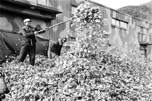 北京:3000余立方米绿废堆肥发酵