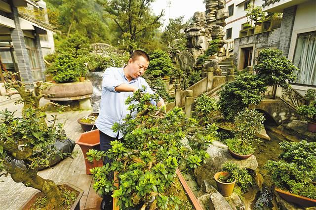 重庆双龙村:盆景年销售额超2000万元
