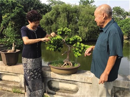 林鸿鑫夫妇对中国盆景艺术分类归纳 望其走向世界