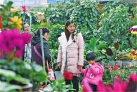 银川节前花卉热销