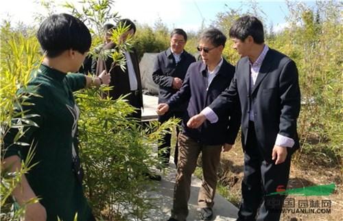 世界竹子大会将于2020年在云南举办
