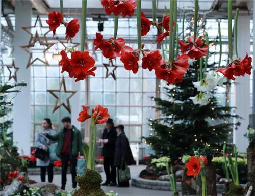 法兰克福棕榈园举办圣诞主题植物展