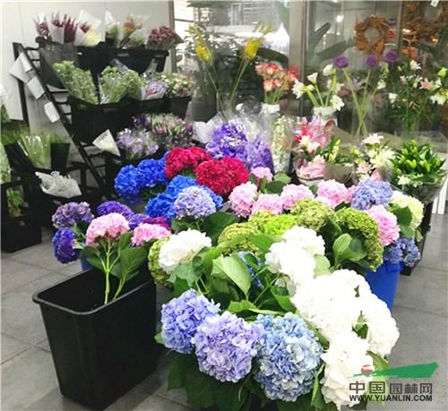 成都花市进口鲜切花以质取胜市场好
