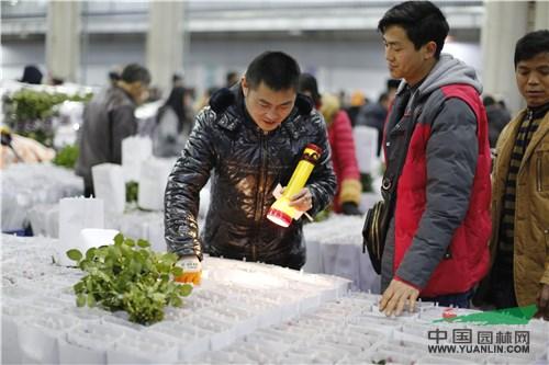 斗南花市:冬季鲜花价格持续坚挺