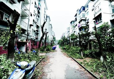 """武汉一小区物业违规修剪树木 林阴路变成""""光棍路"""""""