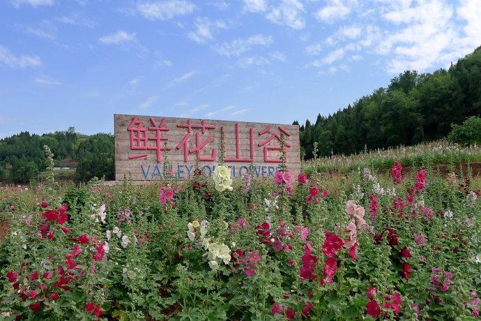 """浪漫""""鲜花山谷""""从遇见植物猎人开始"""