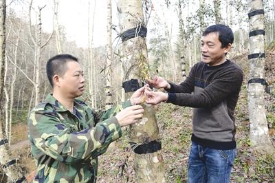 福建建瓯:大力发展林下经济 年产值达30.8亿元