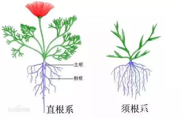 多肉植物根为命,如何修根来保命