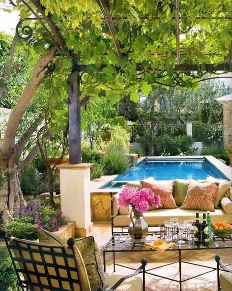 园艺:院子里梦境般的花果藤架