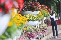 昆明将新建20余个公园绿地 街头将增添1075万盆花