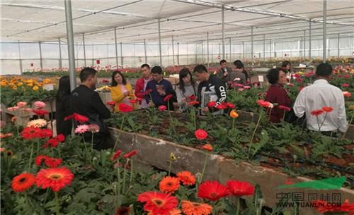 云南花卉产业发展成绩斐然