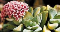 水仙风信子这样的小盆景植物和花卉受欢迎