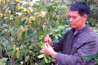 我国金花茶新品种首获植物新品种权