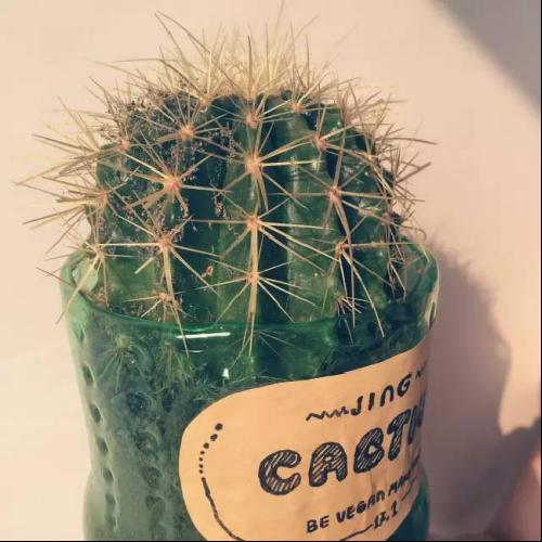 当旧物遇到了花,没想到它们竟然成了这样的花盆,最常见的矿泉水瓶和