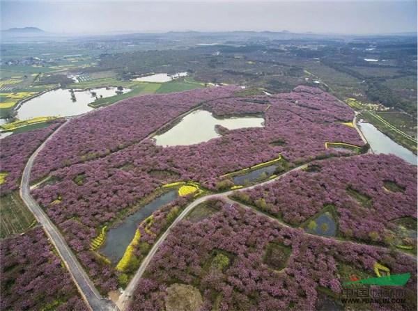 壁纸 成片种植 风景 植物 种植基地 桌面 600_447