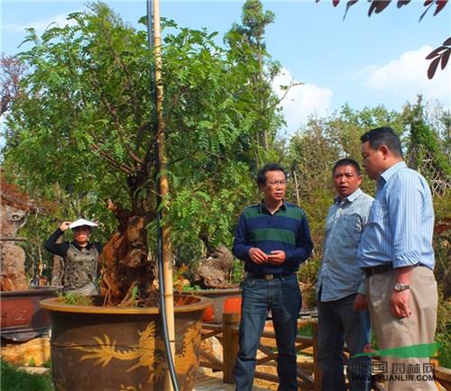 云南首次举办园林景观树造型培训 让造型苗木走进家庭