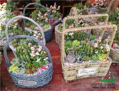 昆明:组合盆栽在同质化竞争中产生价值